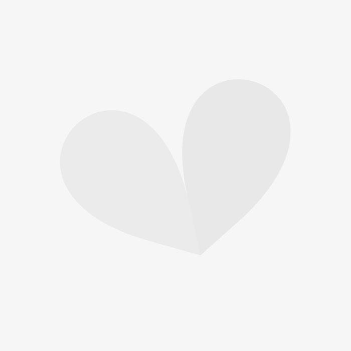 Standard Hybiscus Tricolour interwoven